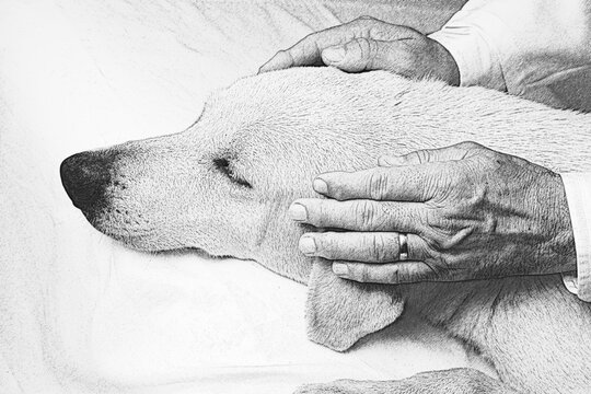 Illustration of Japanese Reiki technique application on a dog