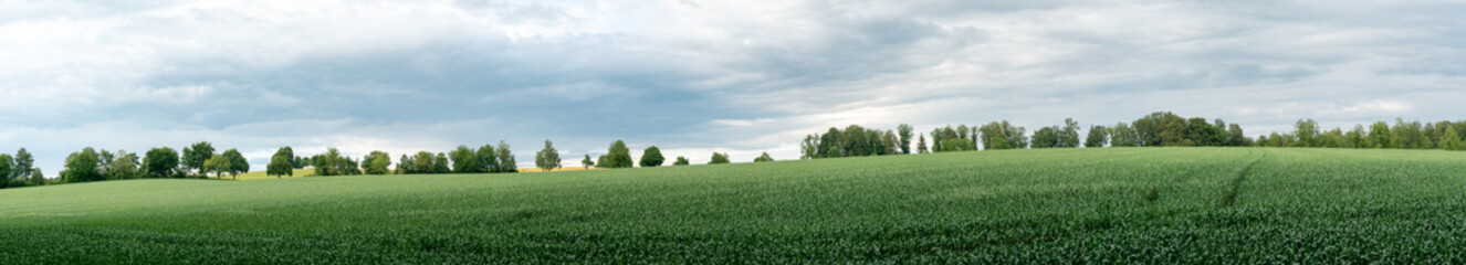 panorama landscape of green farm fields and trees in the background