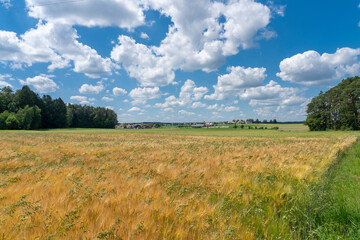 Landscape vith village und a blue cloudy sky and a Ripe cornfield, a mix of barley and oats on a warm summer day in Franconia, Bavaria, Germany