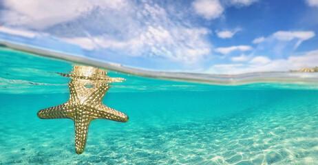 goldener Seestern im Meer