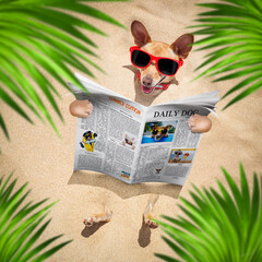 Stores à enrouleur Chien de Crazy dog at the beach reads newspaper