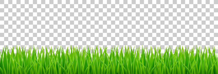 Green grass on spring lawn or field. Vector realistic border of summer meadow plants isolated on transparent background. Grassland horizontal banner