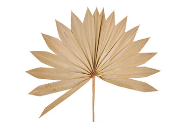 Dried fan shaped palm leaf isolated on white background Wall mural