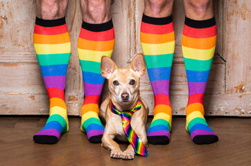 Keuken foto achterwand Crazy dog gay dog with owner and rainbow socks