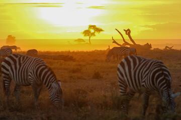 Printed kitchen splashbacks Zebra zebras in the savannah