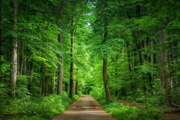 Printed roller blinds Road in forest Pathway surrounded by greenery in a forest under the sunlight - perfect for wallpapers
