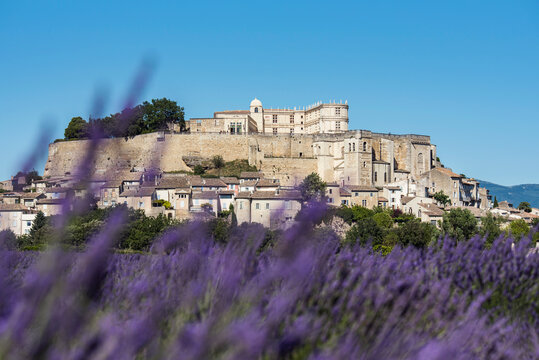 French Grignan village dominating blooming lavender field during daytime. France 2020