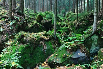 Czech Republic-view of forest in the Teplice Rocks