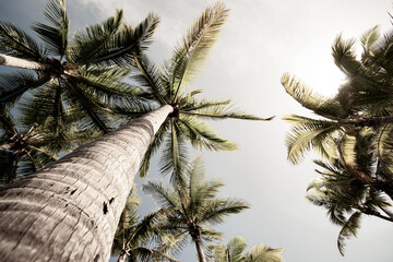 Tropical palm trees rising skyward in aged effect image. Fotobehang