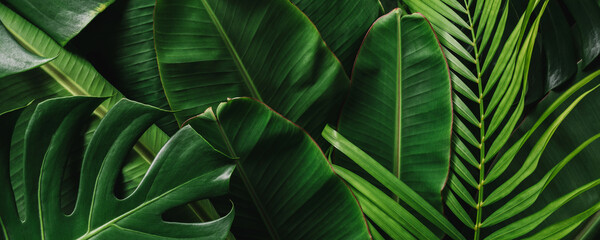 Creative tropical green leaves banana,palm, monstera and fean layout. Nature spring concept. Flat lay.
