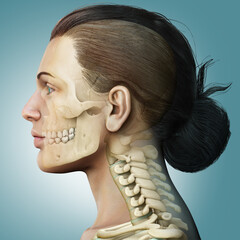 3d rendered, medically accurate illustration of a female scull and neck anatomy