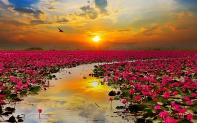 Printed kitchen splashbacks Lotus flower sunset over the field