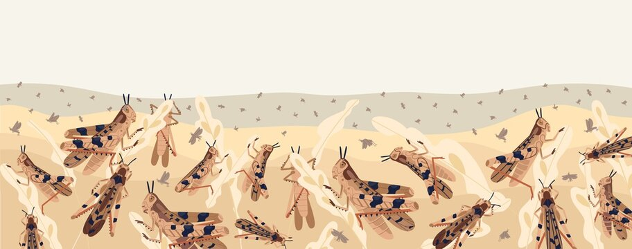 Colorful locusts attacking plants field horizontal background. Swarm of Insects threatening food security vector illustration. Large grasshoppers parasite on ripe seasonal seed head isolated on white