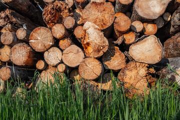 Wall Mural - Wooden logs and green grass