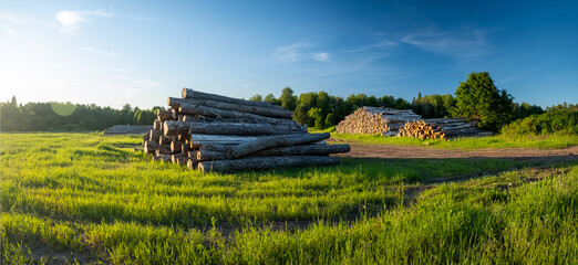 Wall Mural - Cut logs on the green meadow in the forest