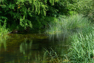 Beautiful river floating through a lush, green area. Reflections from trees. All green picture.