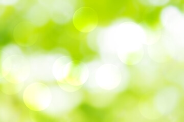 Wall Mural - Green and white bokeh background from natural forest