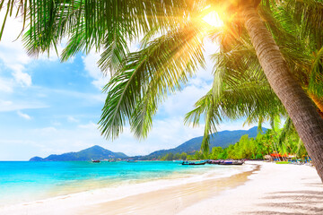 Blue sky, coconut palm trees and beautiful sand beach in Koh Tao, Thailand.