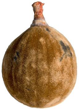 Fruit du baobab sur fond blanc