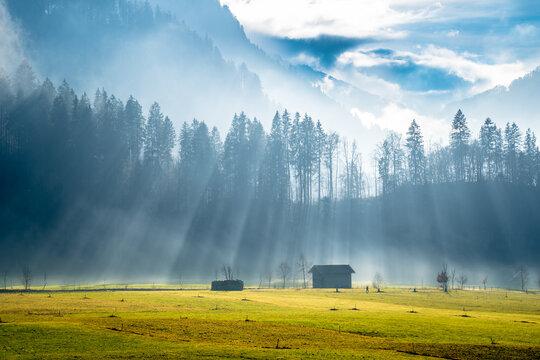 Sunrise in Alpine meadow