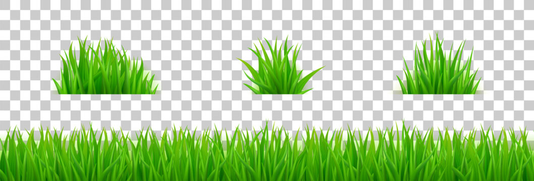 Green grass on spring lawn or field. Vector realistic set of border of summer meadow plants and bunch of grass isolated on transparent background