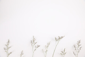 Tuinposter Bloemen Caspia flower little purple flower plant isolated in white background in top view