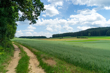 Fotoväggar - rural landscape with green field