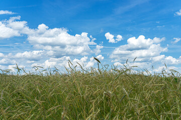 Fotoväggar - grass and sky