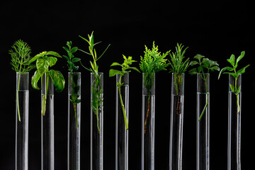 Test Tubes with small plants Isolated on white.herbal medicine or Genetically Modified Organisms