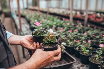 man working in greenhouse flowers nursery