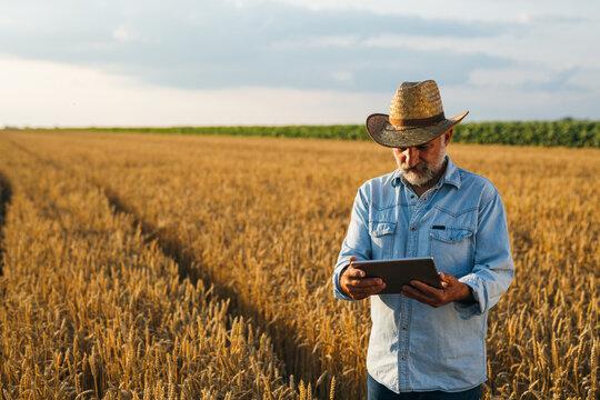 farmer using tablet standing in wheat field