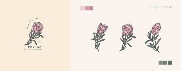 Vector illustration protea flower- vintage engraved style. Logo composition in retro botanical style.