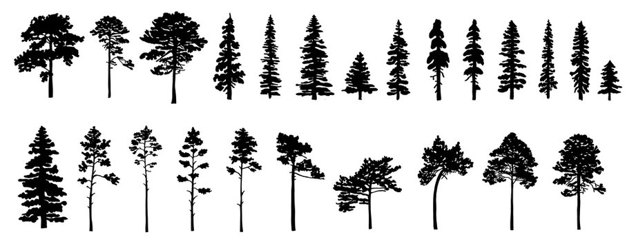 Set of tree silhouettes of different types and shapes isolated on white background. Vector illustration.