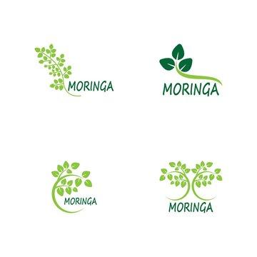 Moringa leaf vector template illustration