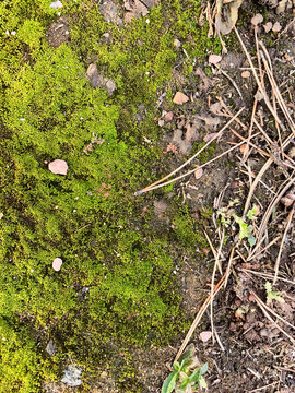 A rustic closeup of the forest floor or ground, a green mossy texture with rocks, dirt, and pine needles.