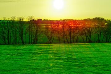 Tuinposter Groene Widok na soczyste zielone pola