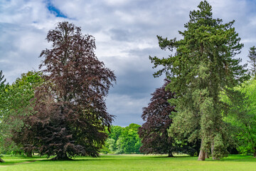 Park in the Fuldaaue with many old trees in Kassel, Germany