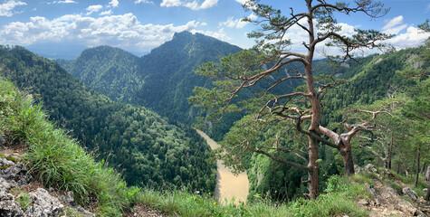 Photo sur Plexiglas Olive view to to the Dunajec river, from Sokolica peak, Poland and Slovakia, Europe