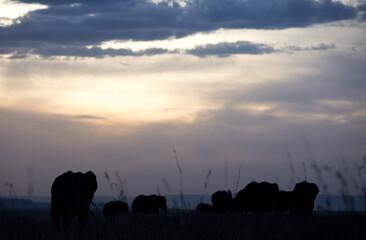 Wall Mural - Silhouette of African elephants during sunset at Masai Mara, Kenya