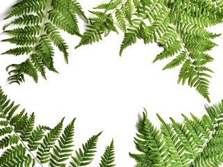 Fototapete - Fern leaf frame with place for text. Fern isolated on a white background, top view.