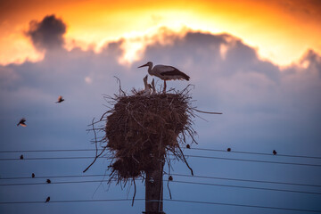 Stork in a nest and flying birds in a sunset sky