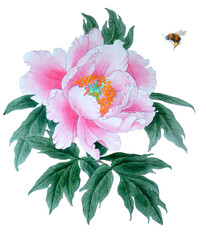 Watercolor of pink peony with bumblebee illustrations, isolated object on white background.;