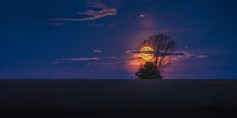 Foto auf Acrylglas Aubergine lila Moon rise over Northern Wisconsin Farm Filed with Lone tree