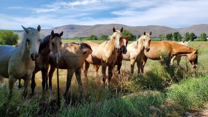 A group of friendly horses in the pasture on a sunny day