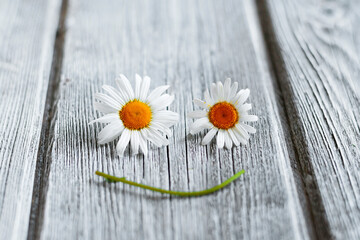 a smiley face made of daisies on a white old wooden background. free space for text