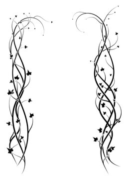 ornament frame from ivy plants on white. vector