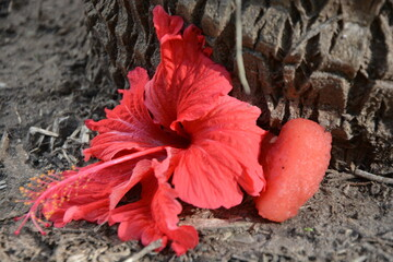 Obraz Czerwony kwiat z sercem - fototapety do salonu