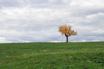 Fotoväggar - tree in the field