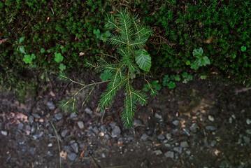 Keiner Tannenbaum im Wald