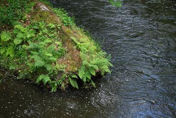 Farne auf einen Stein am Wasser